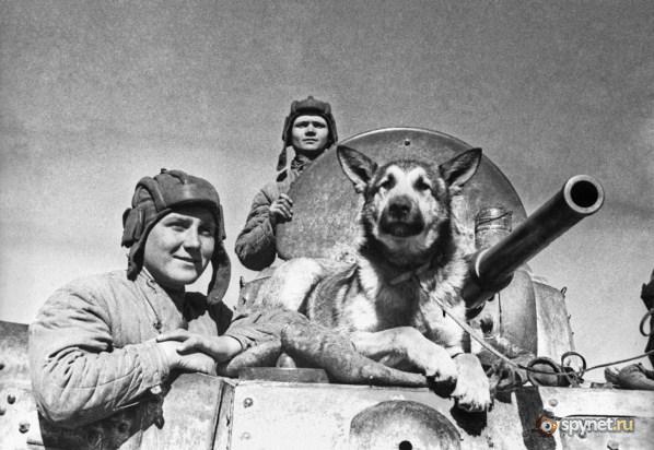Собаки во время Великой Отечественной войны