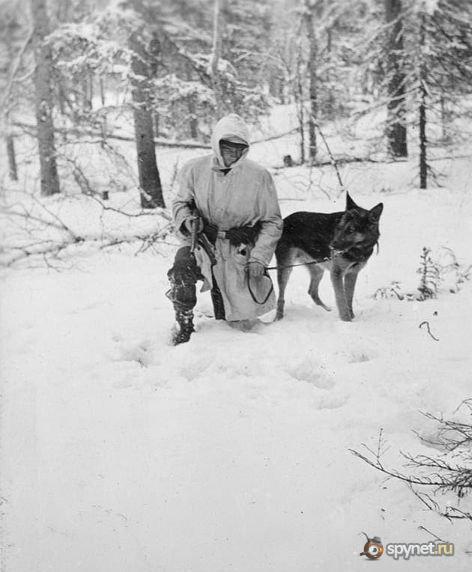 Собаки подрывали вражескую бронетехнику в боях под Москвой, Ленинградом...