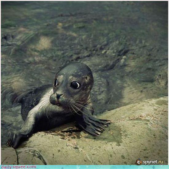 Милейшие фотографии животных (97 штук)