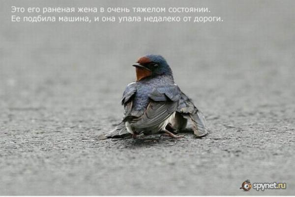 Грустная история (6 фото)