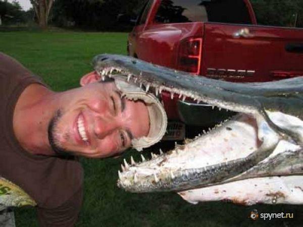 Рыба-Аллигатор (10 фото)