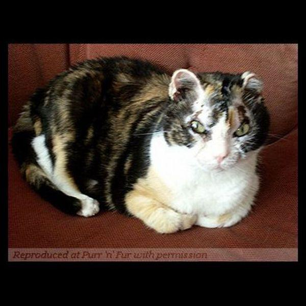 Скарлетт - кошка героиня! (16 фото)