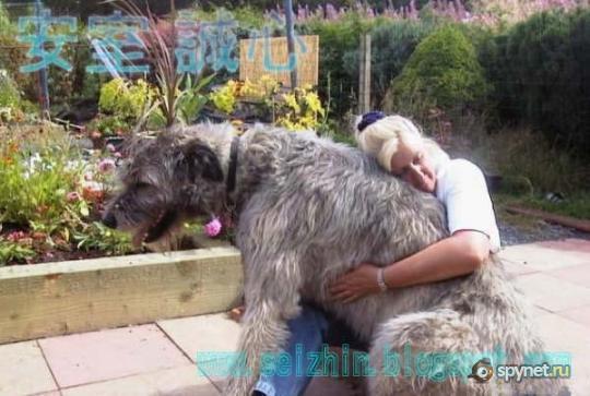 10 самых больших собак в мире (10 фото)