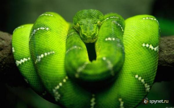 Самые опасные животные нашей планеты