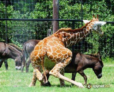 Смешные животные (30 фото)