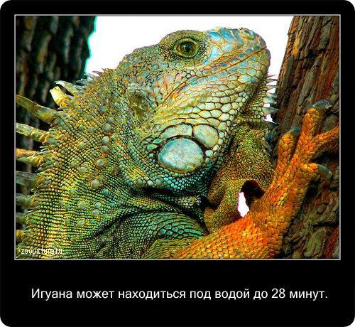 Интересные факты о животных  (38 фото)