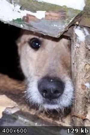 Преображение бездомных собак (58 фотографий)
