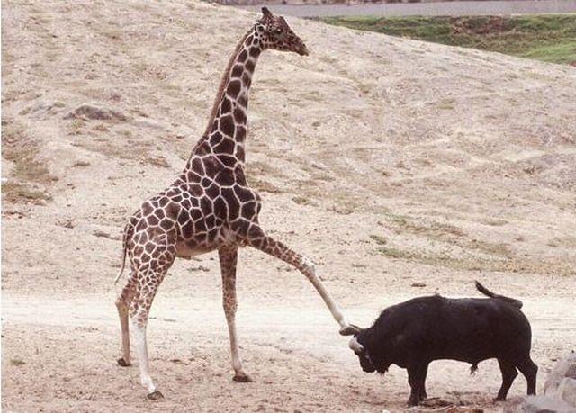 Фото животных (22 штуки)