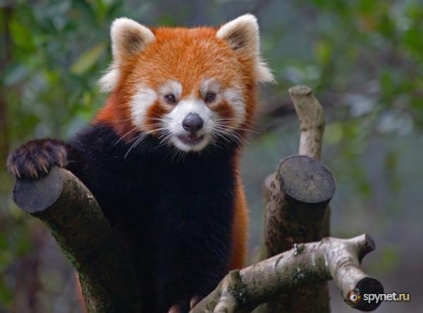 Интересные животные / Informative blog / SpyNet - Спайнет