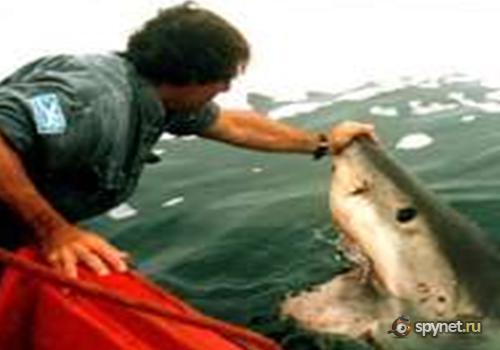 ...нападения акулы на человека очень низкая и с ними можно дружить.