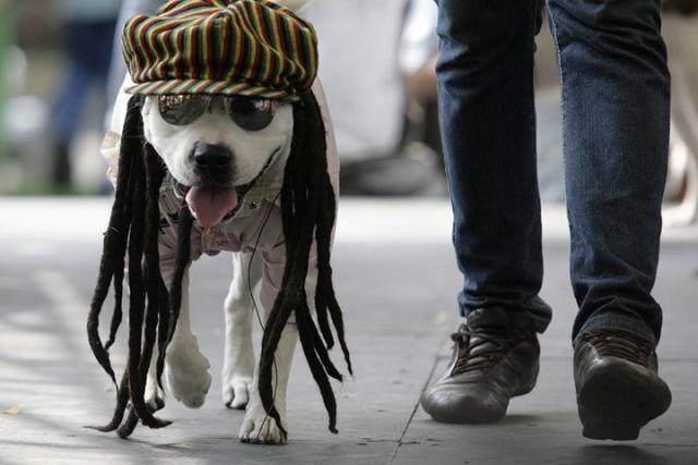 Собачья мода (под катом веселее)))