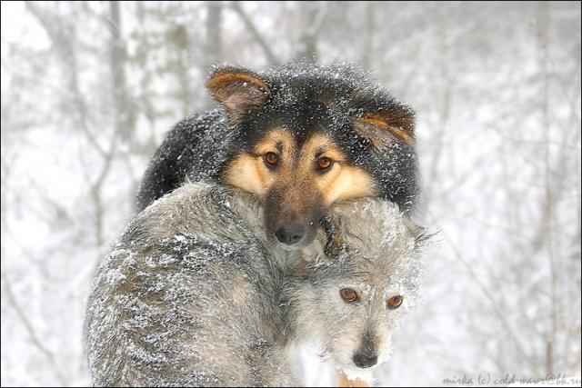 Звери животные люди человек фото
