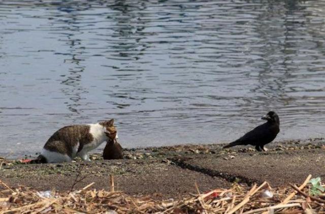 Это моя рыба! (5 фото)