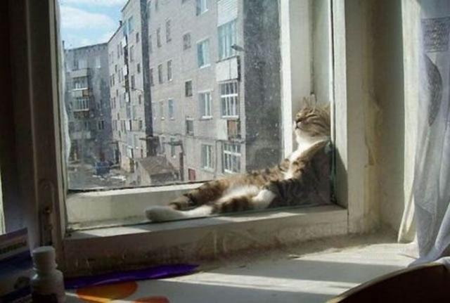 Самые смешные и нелепые позы котов 45