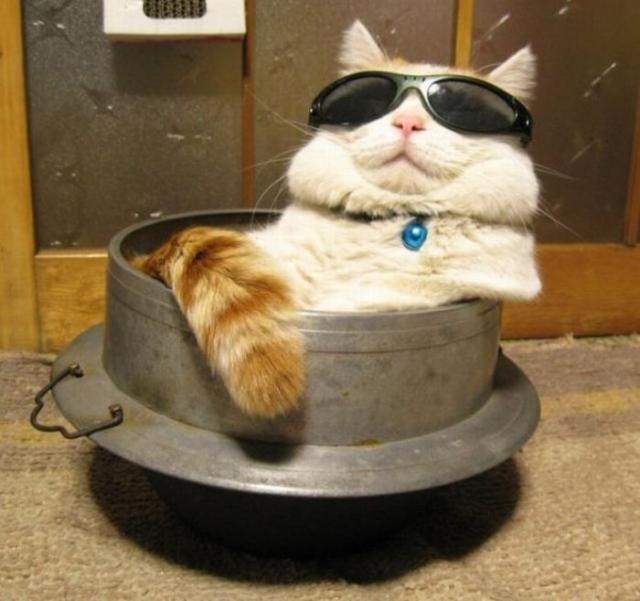 Самые смешные и нелепые позы котов (45 фото)