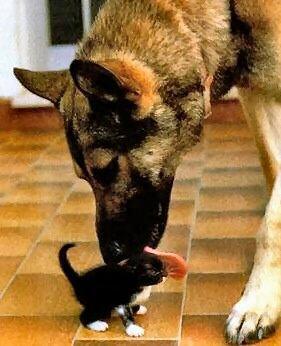 Кошки и Собаки