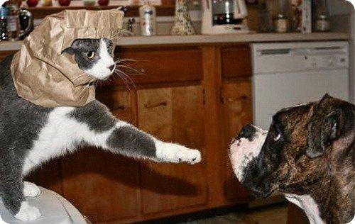 Кошки и Собаки-2