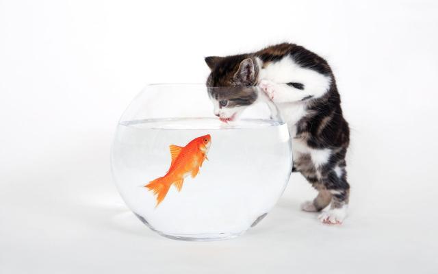 Интересные факты и мифы о кошках...