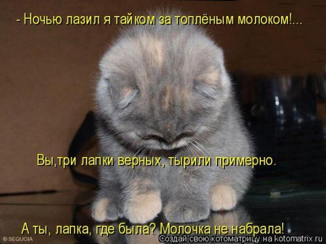 Прикольные котоматрицы за неделю (50 фото) .