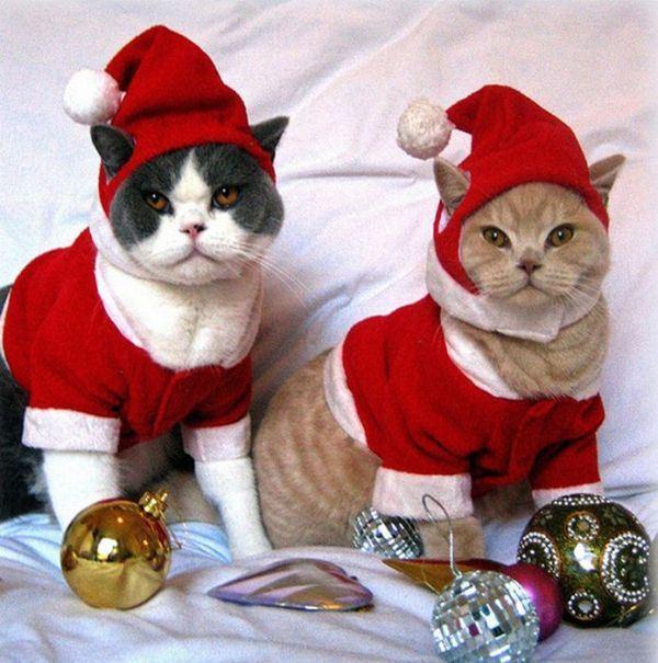Костюм на новый год для кота своими