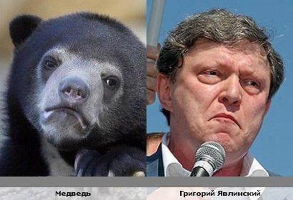 Сравнение фото со знаменитостями