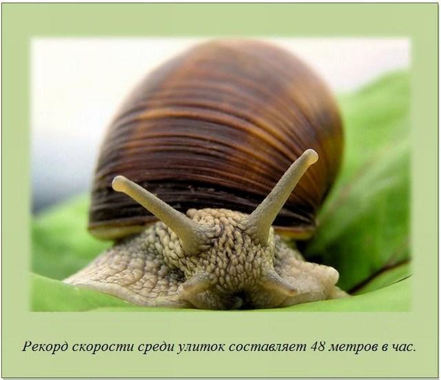 http://s.spynet.ru/uploads/posts/2012/0207/fakti_02.jpg