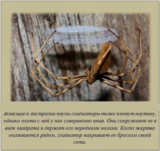 http://s.spynet.ru/uploads/posts/2012/0207/fakti_06.jpg