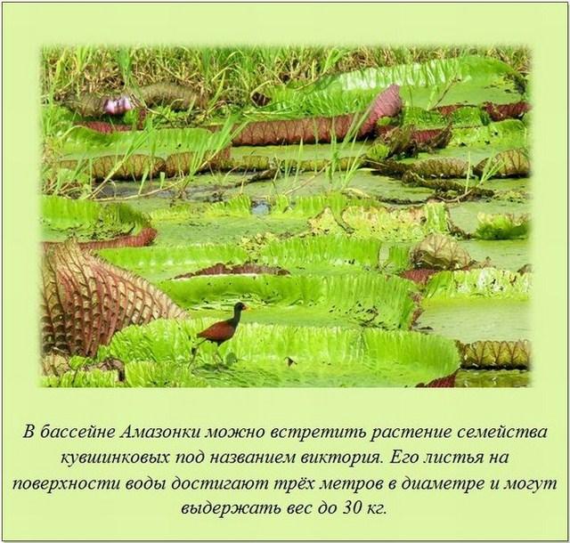 http://s.spynet.ru/uploads/posts/2012/0207/fakti_17.jpg