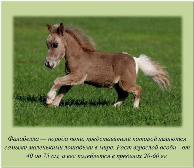http://s.spynet.ru/uploads/posts/2012/0220/fakti_23.jpg