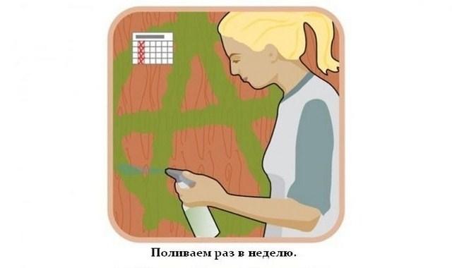 Нравится.  Источник: NovMix.net - Живые граффити.