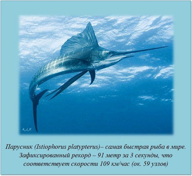 http://s.spynet.ru/uploads/posts/2012/0229/fakti_10.jpg