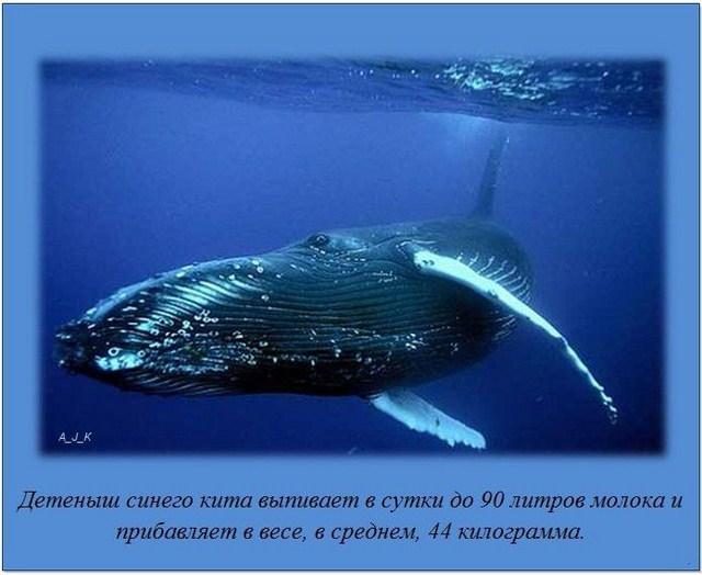 http://s.spynet.ru/uploads/posts/2012/0229/fakti_25.jpg