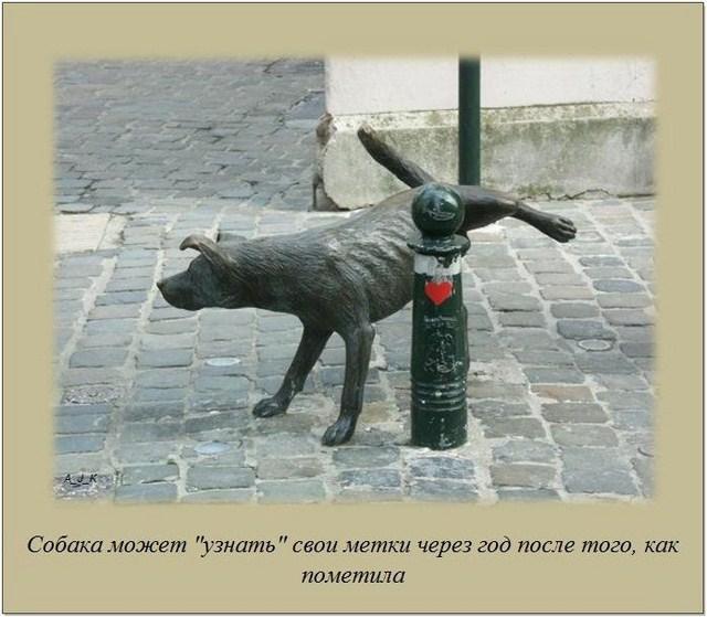 http://s.spynet.ru/uploads/posts/2012/0229/fakti_45.jpg