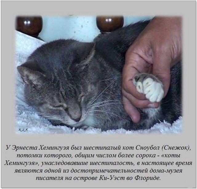 http://s.spynet.ru/uploads/posts/2012/0322/fakti_03.jpg