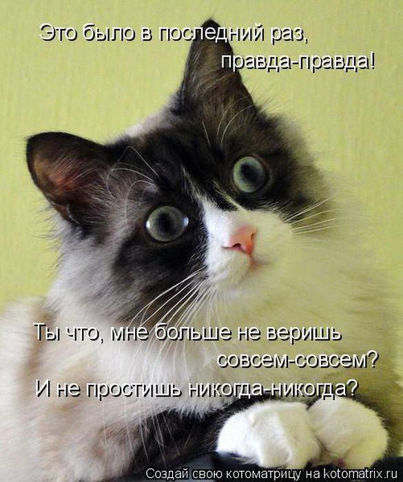 http://s.spynet.ru/uploads/posts/2012/0427/kotomatrix_01.jpg