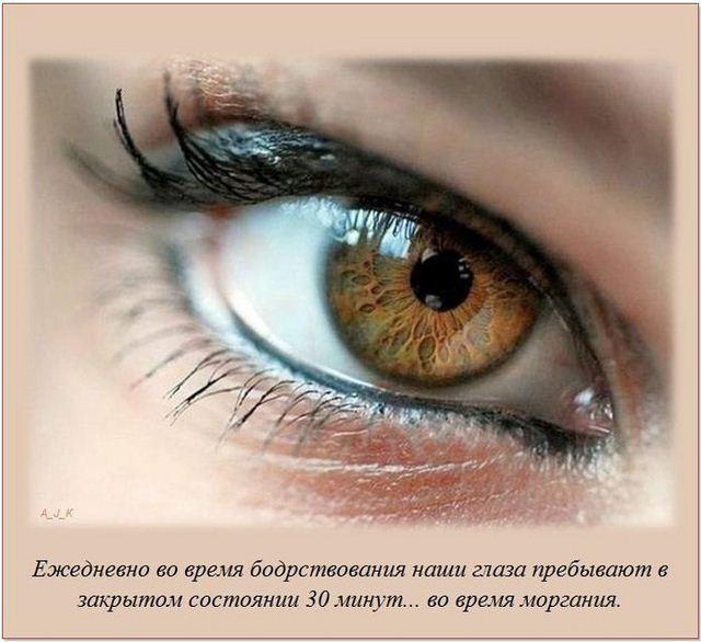 http://s.spynet.ru/uploads/posts/2012/0522/fakti_18.jpg