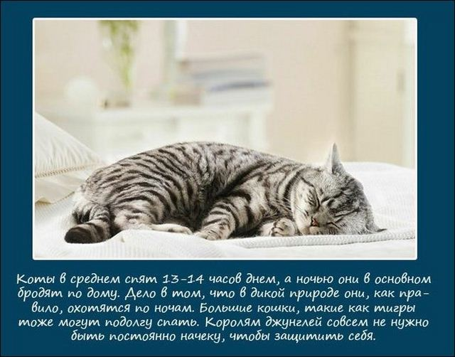 http://s.spynet.ru/uploads/posts/2012/0522/sleeping_animals_02.jpg