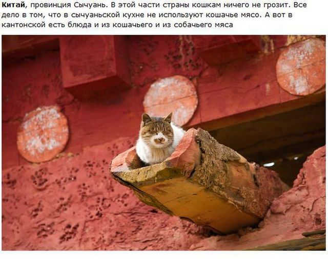 http://s.spynet.ru/uploads/posts/2012/0530/cat_01.jpg