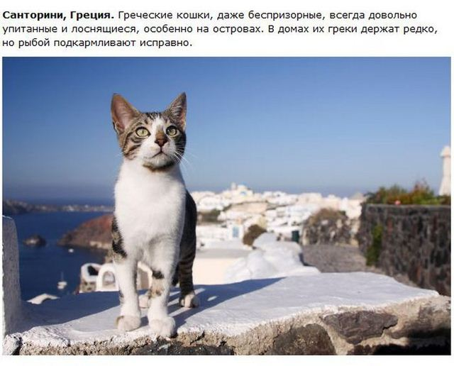 http://s.spynet.ru/uploads/posts/2012/0530/cat_02.jpg