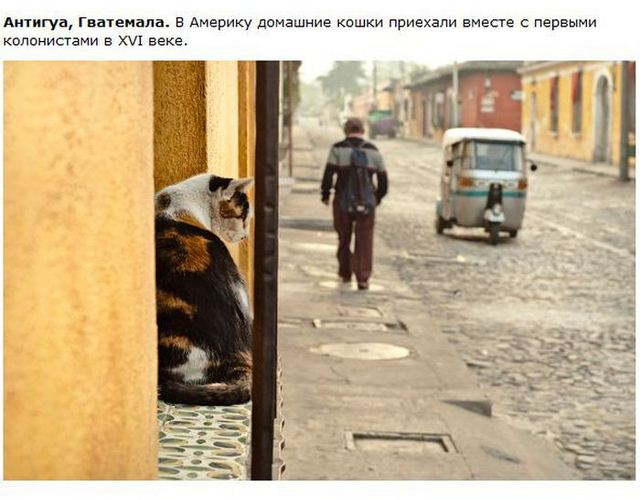 http://s.spynet.ru/uploads/posts/2012/0530/cat_04.jpg