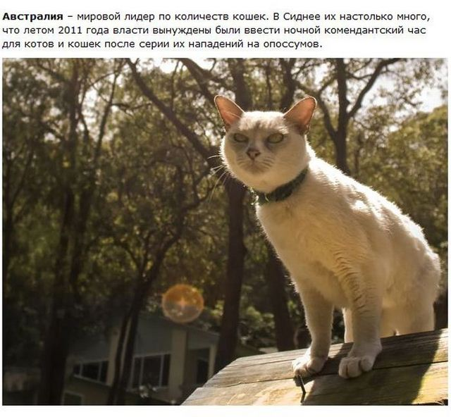 http://s.spynet.ru/uploads/posts/2012/0530/cat_06.jpg