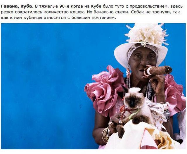 http://s.spynet.ru/uploads/posts/2012/0530/cat_07.jpg