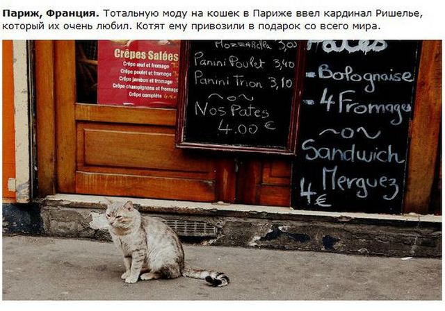 http://s.spynet.ru/uploads/posts/2012/0530/cat_11.jpg