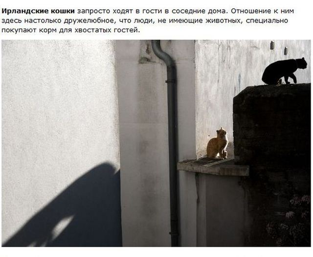 http://s.spynet.ru/uploads/posts/2012/0530/cat_12.jpg