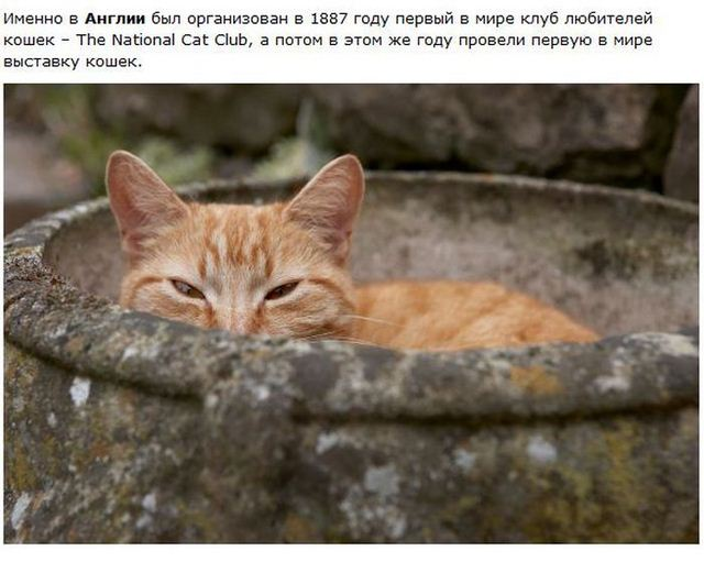 http://s.spynet.ru/uploads/posts/2012/0530/cat_13.jpg