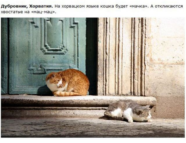 http://s.spynet.ru/uploads/posts/2012/0530/cat_14.jpg