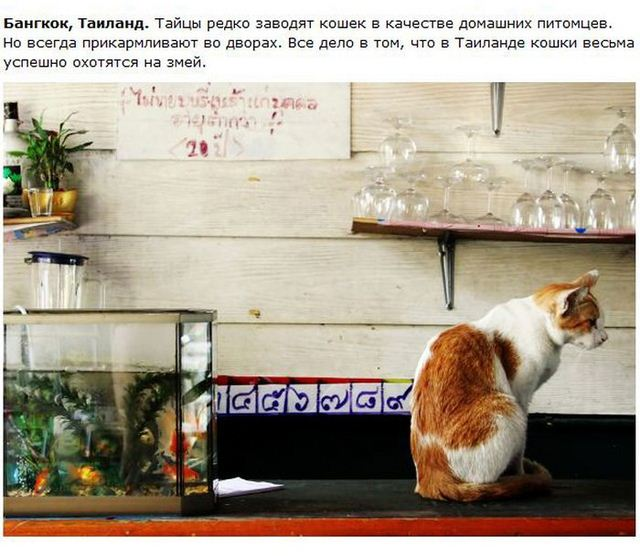 http://s.spynet.ru/uploads/posts/2012/0530/cat_16.jpg