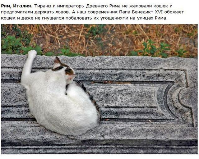 http://s.spynet.ru/uploads/posts/2012/0530/cat_18.jpg