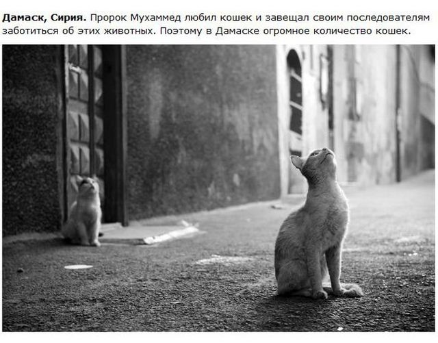 http://s.spynet.ru/uploads/posts/2012/0530/cat_20.jpg