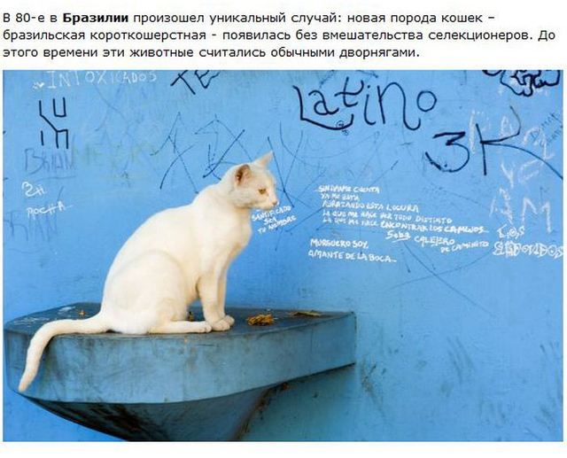 http://s.spynet.ru/uploads/posts/2012/0530/cat_22.jpg